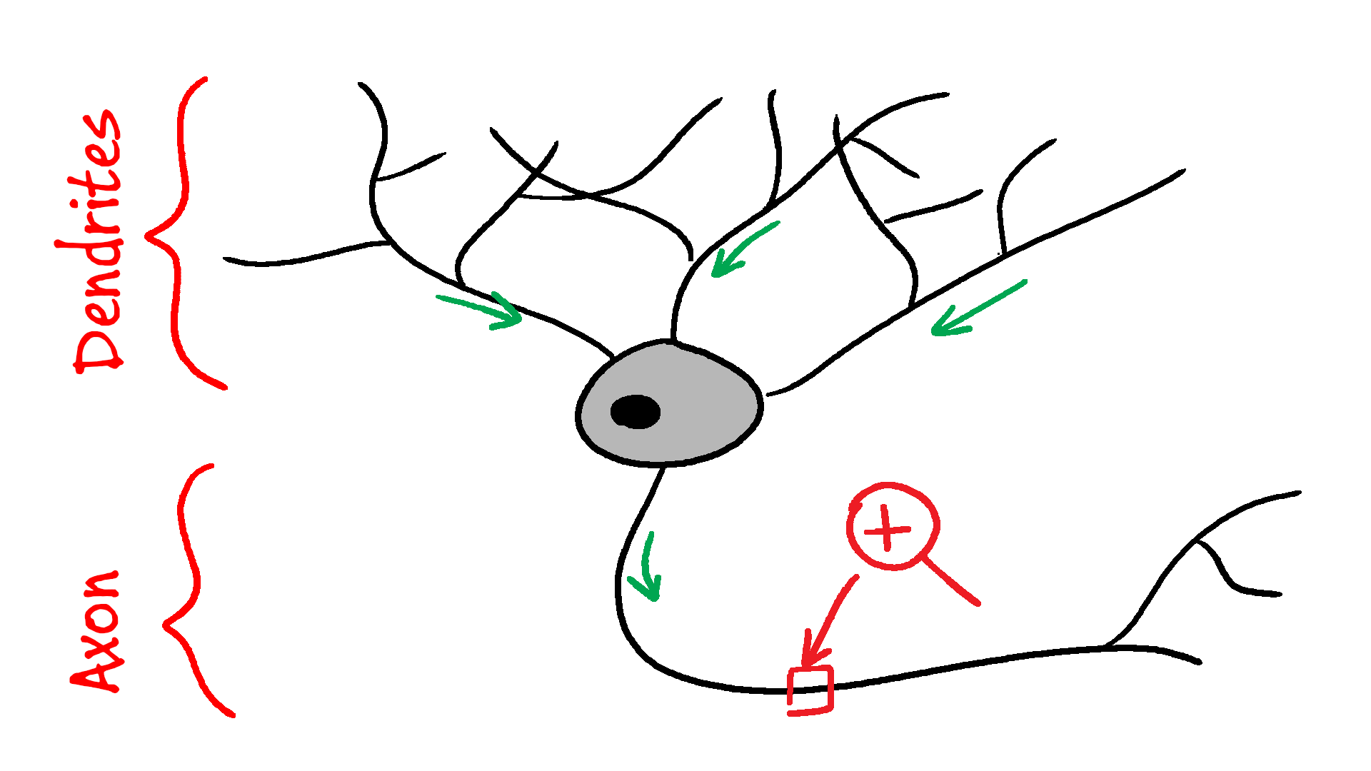 A typical neuron. Source: your brain.